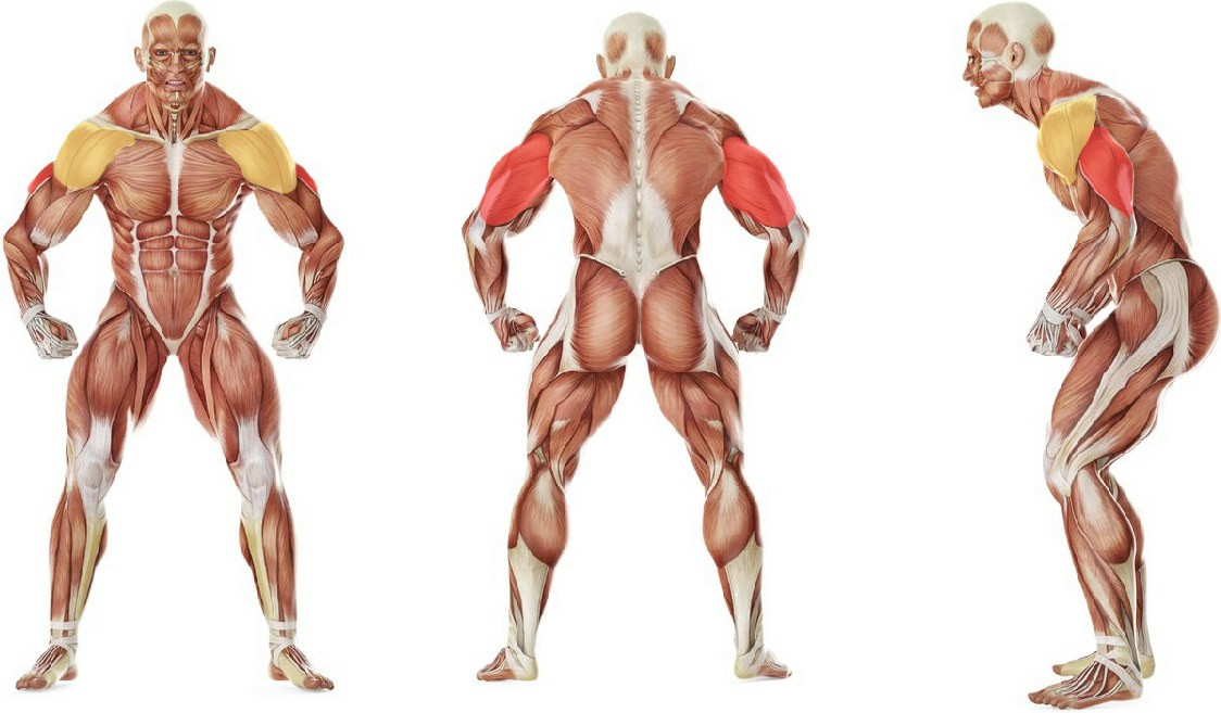 What muscles work in the exercise Tricep Side Stretch